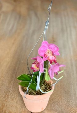 Künstliche Miniaturorchidee - Phalaenopsis - pink